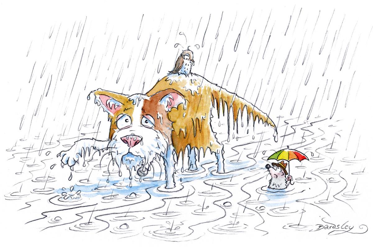 Kater Sebastian im Starkregen